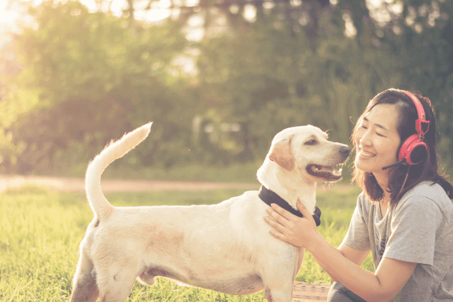 On-demand dog walking apps