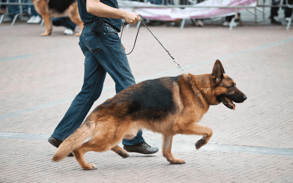 Wag dog walking app